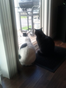 Their favourite activity - staring out the patio door at that tag thing on the propane tank as it dances in the wind.
