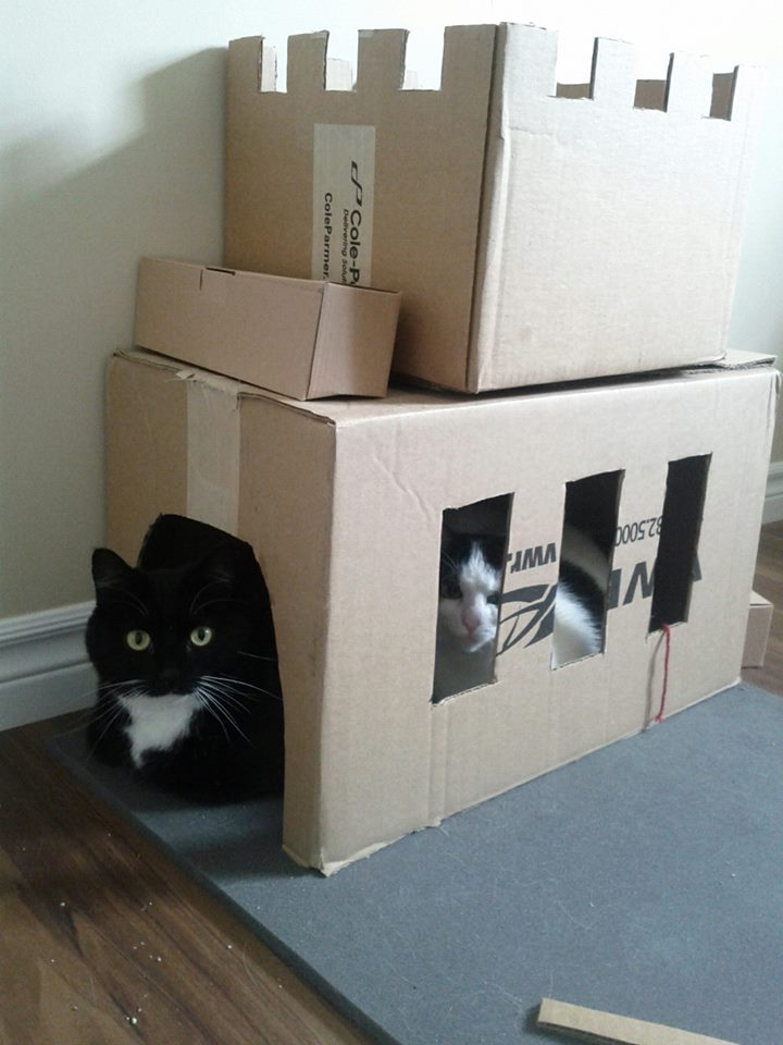 These Bored Owners Made Forts For Their Pets Cat Tank