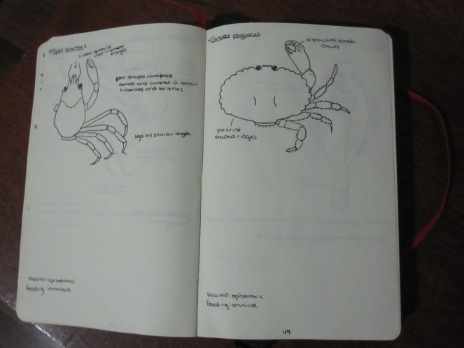 biological drawing crabs