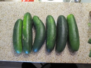 Choose 6 mid-sized field cucumbers to make approximately 6 x 250 ml bottles