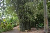We also got to see real bamboo - which is unfortunately an invasive species, but very interesting to behold.