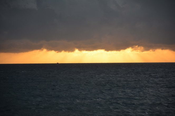 Check out that humpback whale photo-bombing this sunset photo in Maui - distraction strikes again!